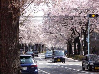 桜maxさくら通り